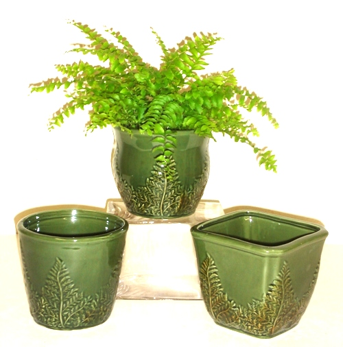 "5"" Ceramic Fern Pottery"